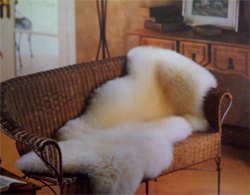 The Shearing Shed Sheepskin Rugs Elegant Yet Relaxed